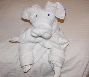 One of many towel animals our cabin steward made for us
