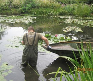 Wading through the lily pads at Monets Garden