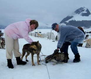 Dog sledging on Juneau Glacier