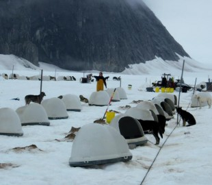 Huskie kennel on Juneau Glacier