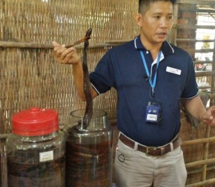 How to make snake wine - MAke snake wine - insert dead snake and ferment for three months - It was actually quite tasty!