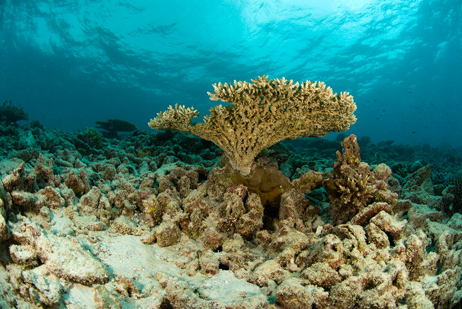 Tragedy As Cruise Line Destroys Thousand Year Old Coral Reef