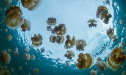 Woman Falls Overboard And Survives In Jellyfish-Infested Waters For 38 Hours