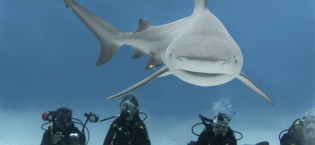 Playa-del-Carmen-Bull-Shark-Dive-Pic-1-e1402708915496[1]