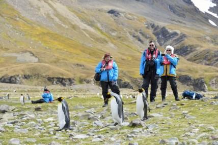 visiting penguins