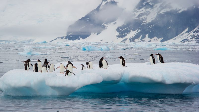 Antarctic with Hurtigruten