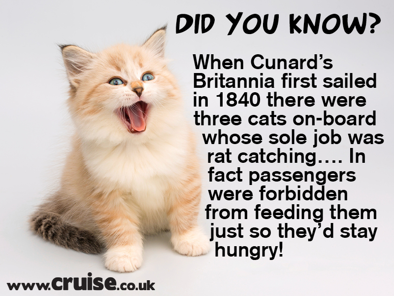 Cunard Rat catcher