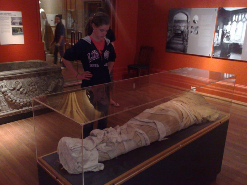 nicholson museum