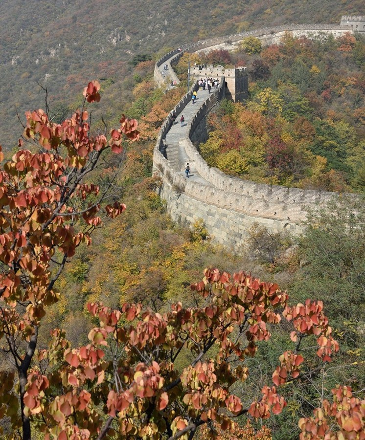 Great wall of china forest