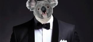 koala in cunard