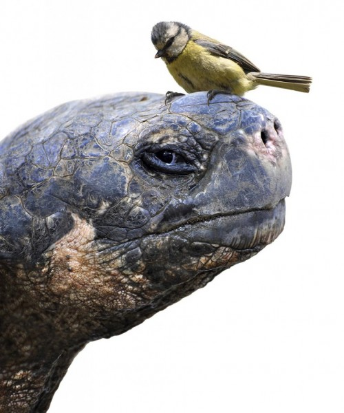 the tortoise and the bird