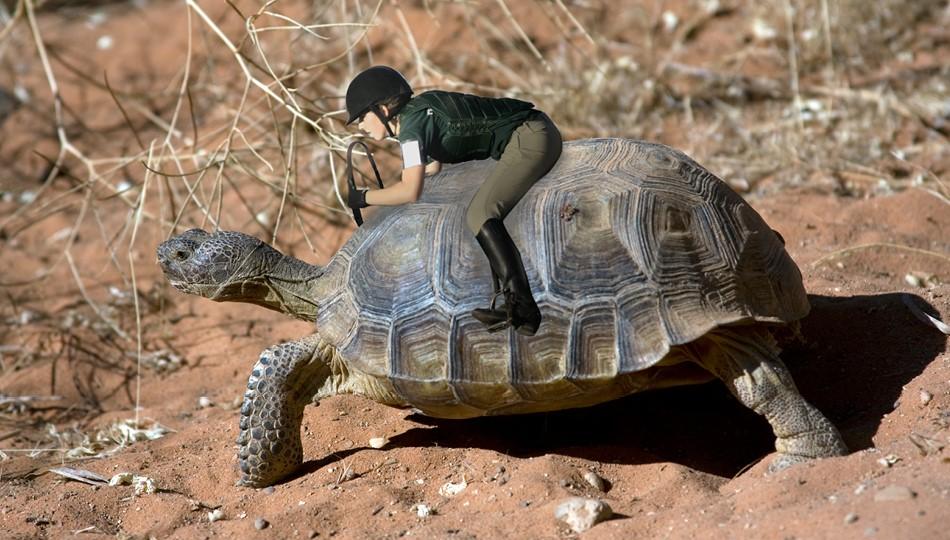 tortoise darwin