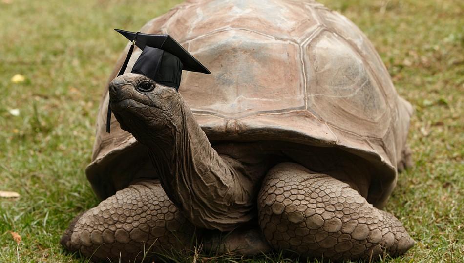 tortoise graduating