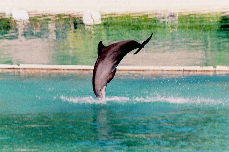 bora bora dolphin