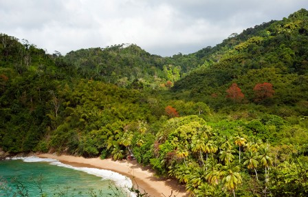 caribbean protected forest
