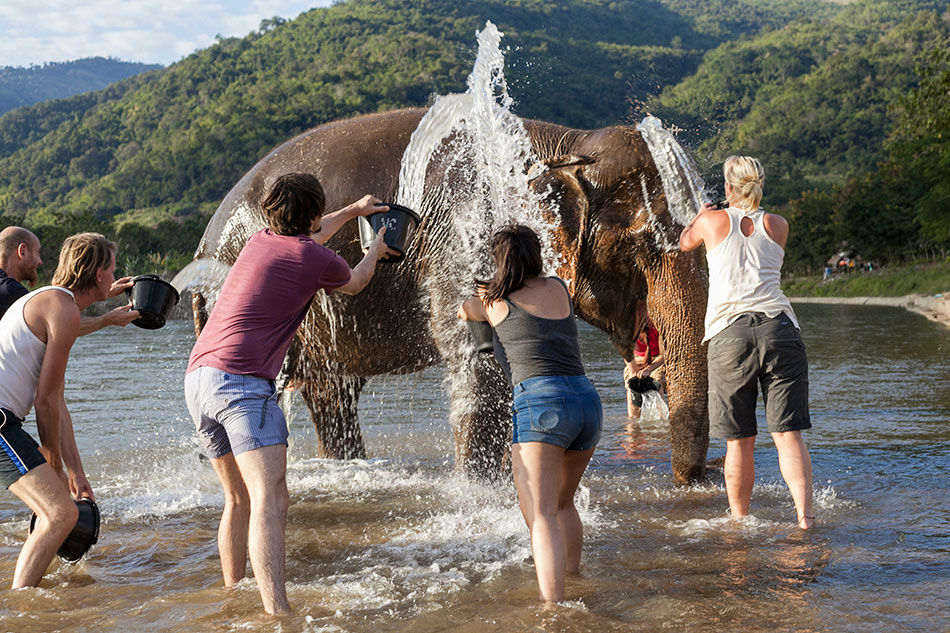 experiences elephants