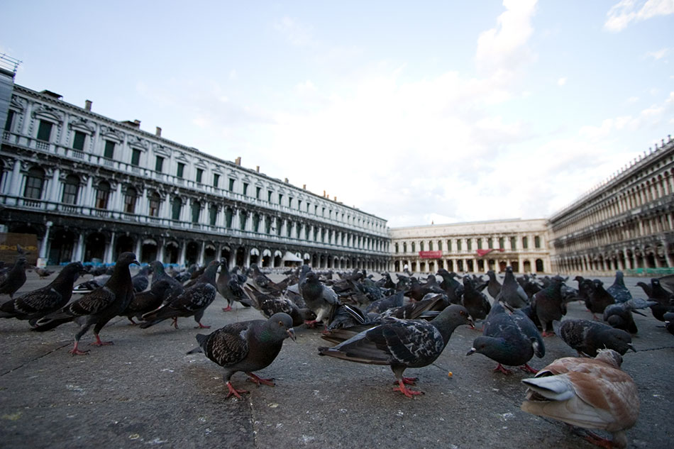 illegal to feed the pigeons in st marks square in Venice