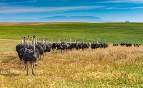 caribbean ostrich farm