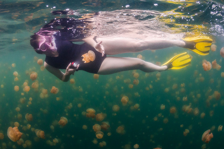 experiences jellyfish lake