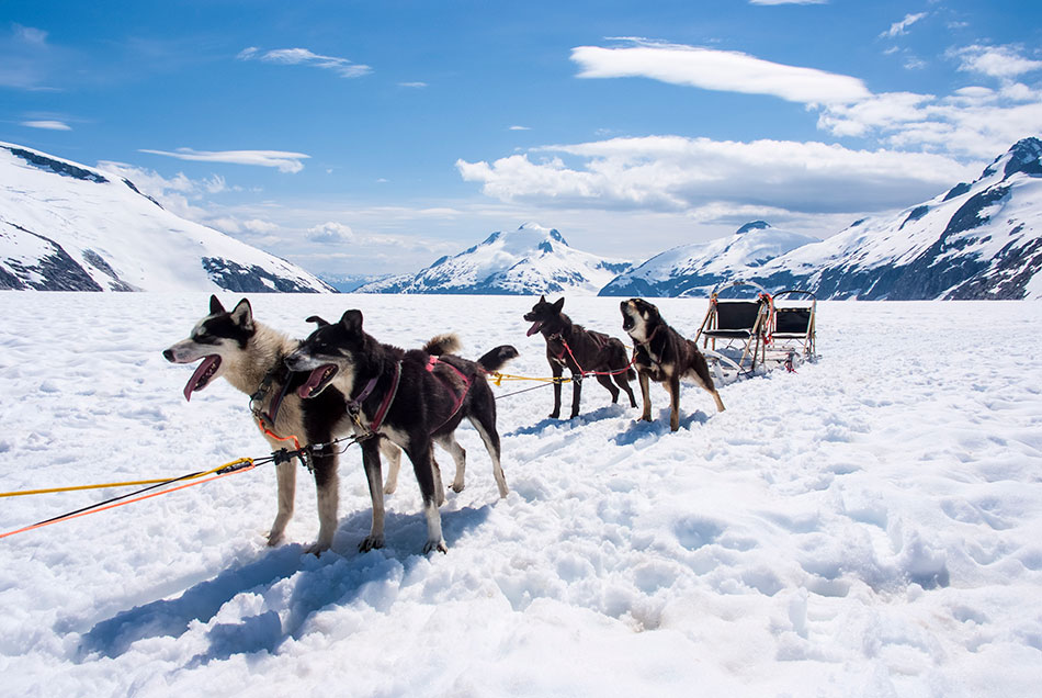 alaska husky sledding
