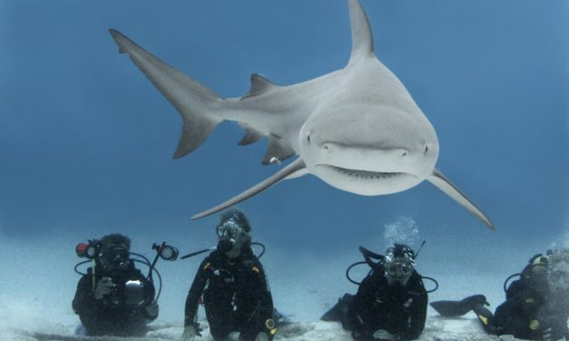 Crazy Images Of Shark Diving – Would You?