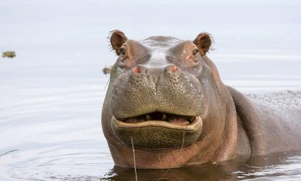 Hippos & Muppets – Cruisers Come in all Shapes and Sizes