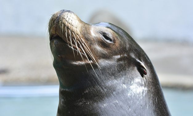 You'll Never Believe What This Sea Lion Does Next