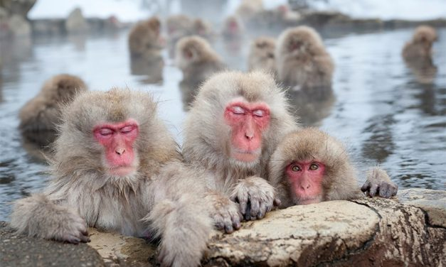 Take A Bath With A Snow Monkey On This Bespoke Journey To Japan