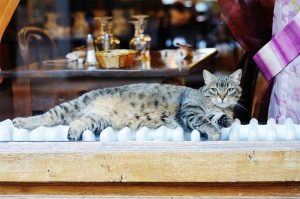 cat in restaurant window