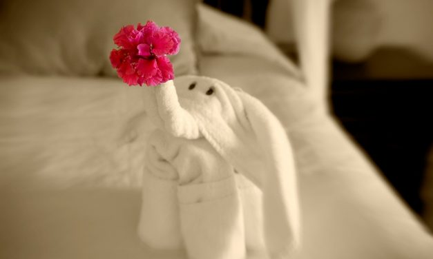Fifteen Really Cool Towel Animals (And Seven Pretty Awful Ones)