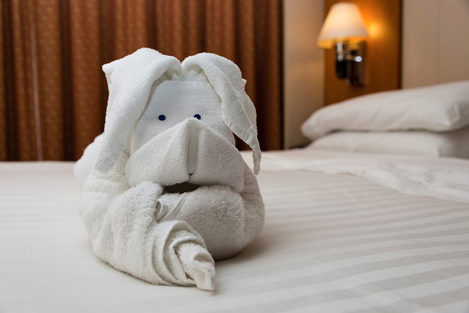 towel pig dog