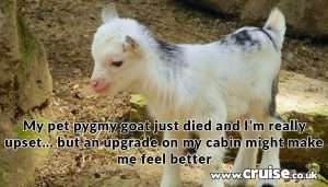 My pet pygmy goat just died and I'm really upset… but an upgrade on my cabin might make me feel better
