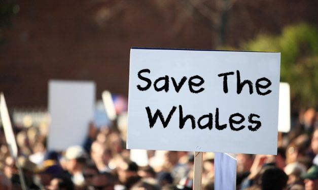 Cruise Lines React With Outrage Over  Slaughter Of Whales