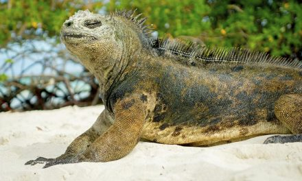 The Weird, Wacky and Wonderful Of The Galapagos Islands