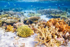 bora bora coral reef