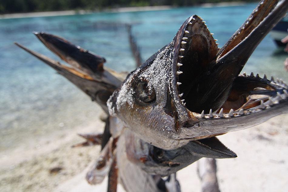 Bora bora fish cruise bulletin for Bora bora fish