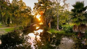 New Orleans Nature