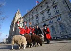 cunard herd sheep