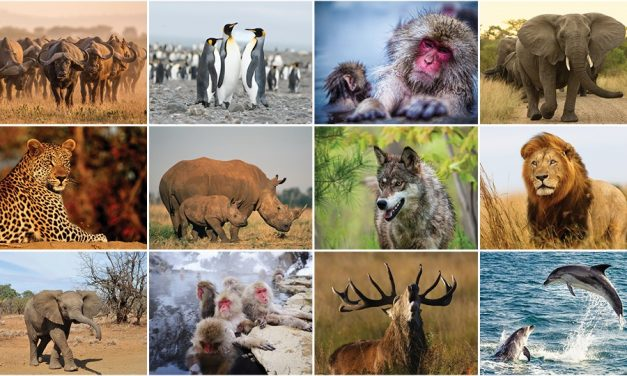 Ever Wanted To Go On An Adventure With Some Amazing Animals?