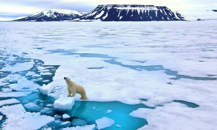 10 Things About The Arctic You Never Would've Guessed