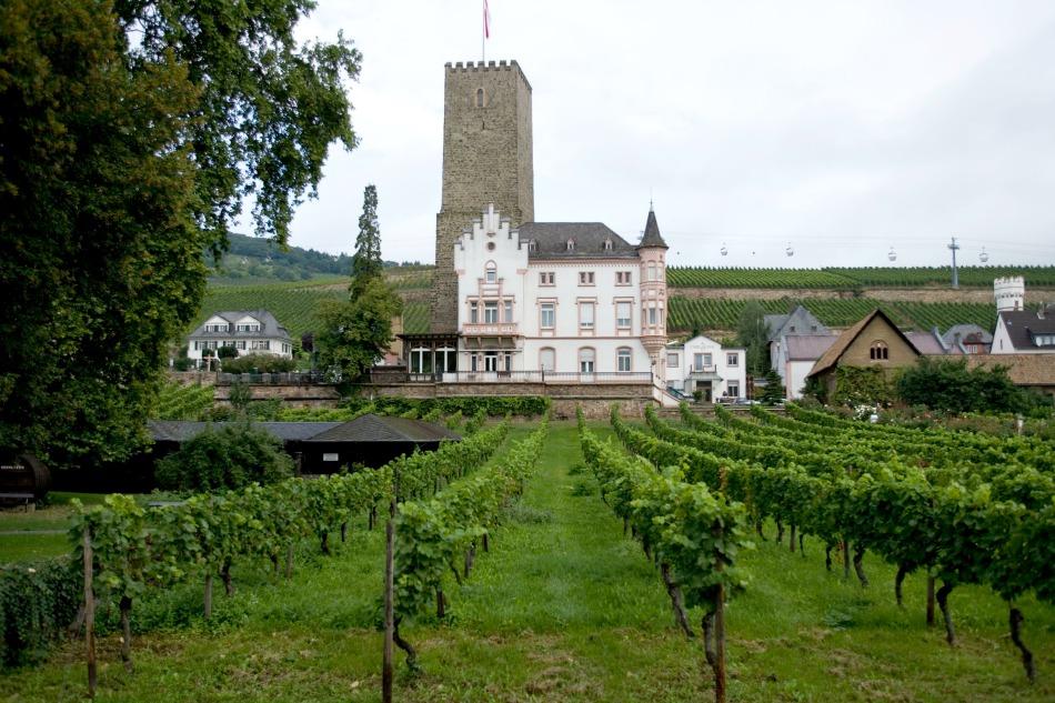 Cochem vineyard Avalon excursion