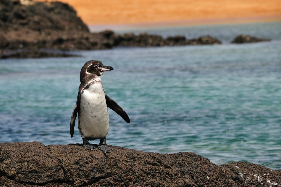 How To Fast Track Your Way To The Galapagos