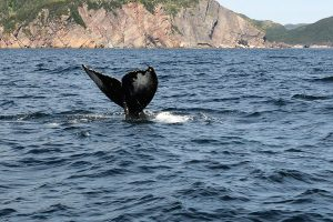 experiences whale watch