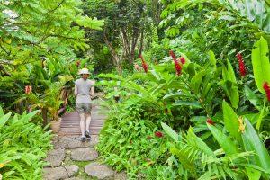 Barbados flower forest