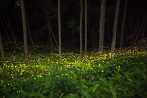 japan forest