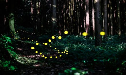 You Won't Believe What Lies Hidden In This Forest In Japan