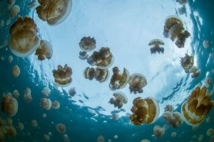 jellyfish infested waters