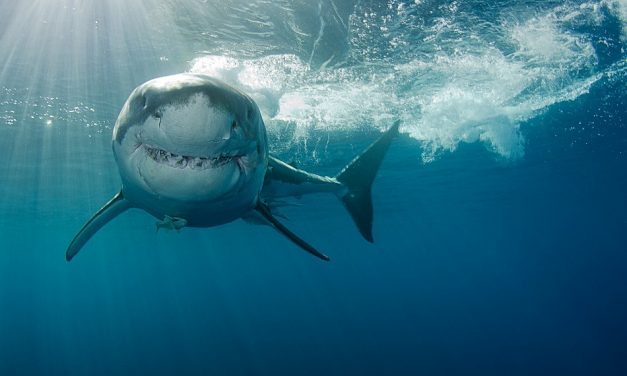 Shocking Images Of Shark Diving Revealed- Would You Dare?