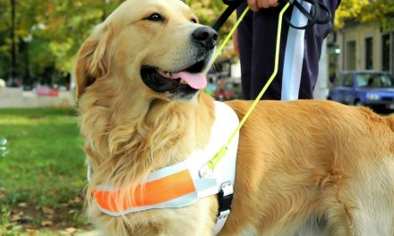 Guide Dogs On Cruise Ships: Everything You'll Ever Need To Know