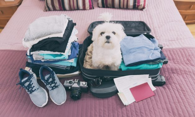 The Big Debate On Cunard's Footsteps: Should Other Cruise Lines Allow Pets Onboard?